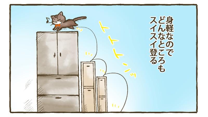 ねこ漫画テールテイルズ:ひめは身軽なのでどんなところもすいすい登る