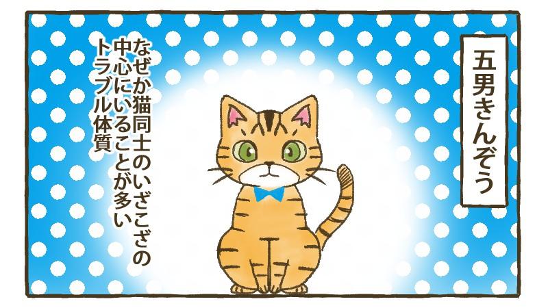 五男きんぞう、なぜか猫同士のいざこざの中心にいることが多いトラブル体質