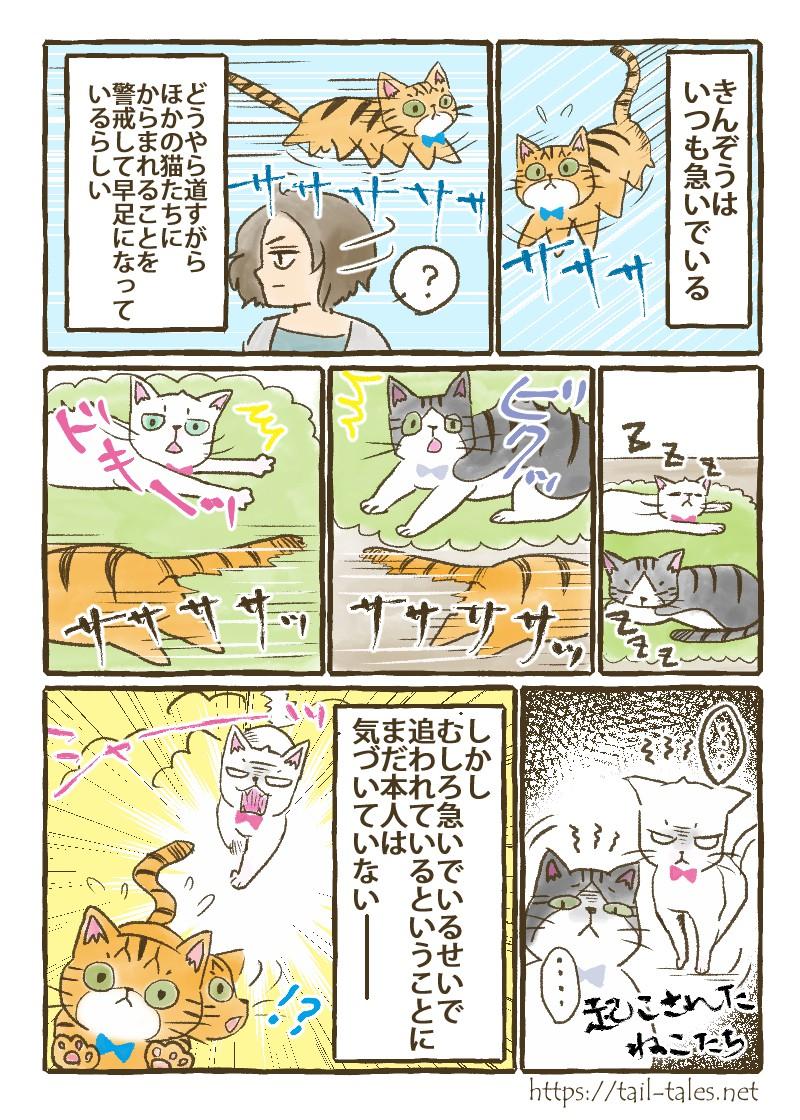 他の猫たちにからまれないように早足で移動するきんぞうだが、むしろ急いでいるせいで追われているということにまだ本人は気づいていない─
