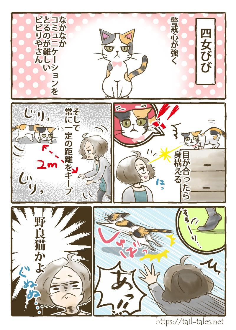 四女びびは警戒心が強くなかなかコミュニケーションをとるのが難しいビビりやさん。目が合ったら身構え常に一定の距離をキープ。その姿はまるで野良猫。