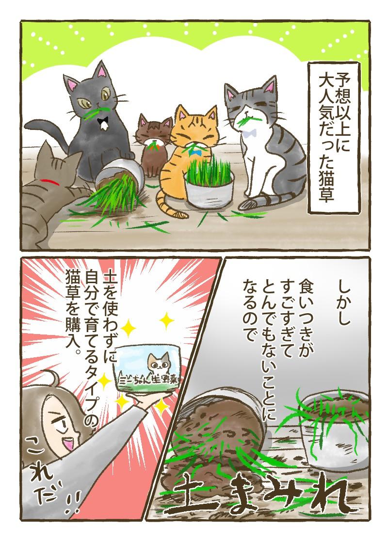 予想以上に大人気だった猫草だがすぐ土まみれにしてしまうのでつちを使わずに育てるタイプの草(ミーちゃん生野菜)を購入